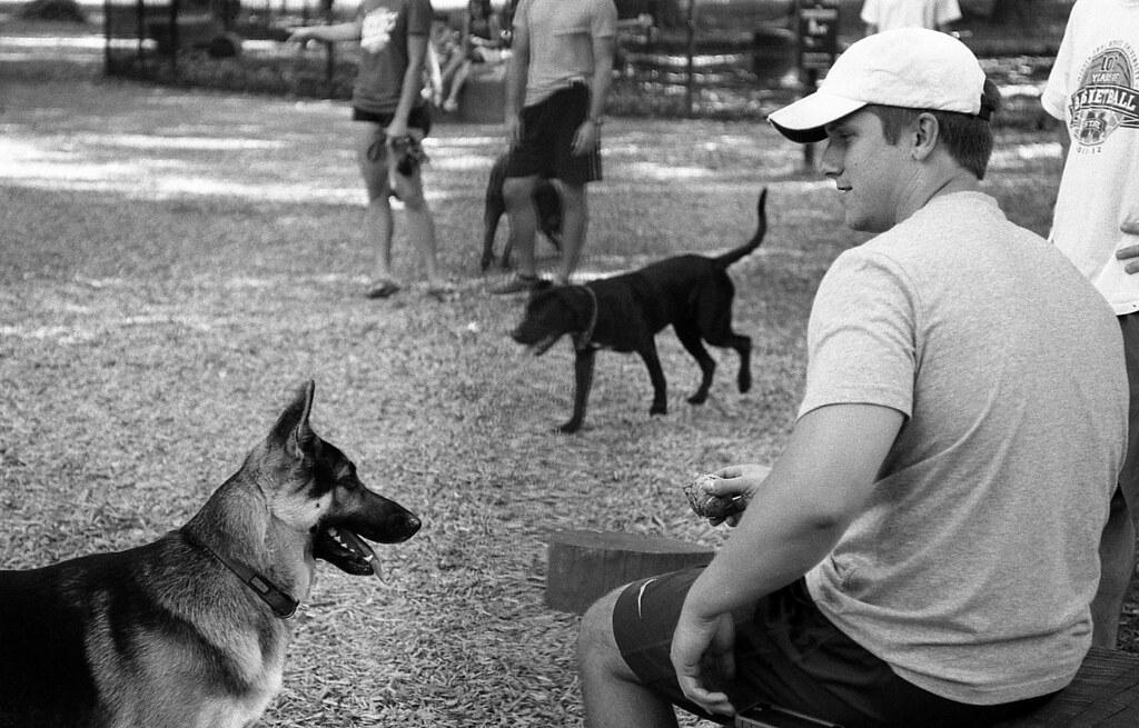 The Dog Bark Park
