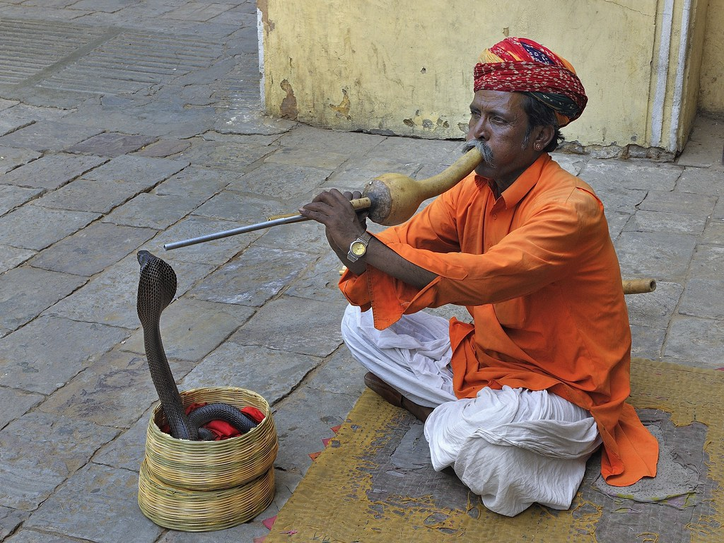 Image result for snake charmer pictures