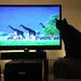 Cat_watching_NatureShow_0188a