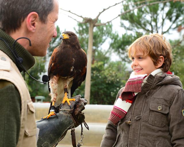 Parque de las Ciencias de Granada y su espectáculo de aves rapaces