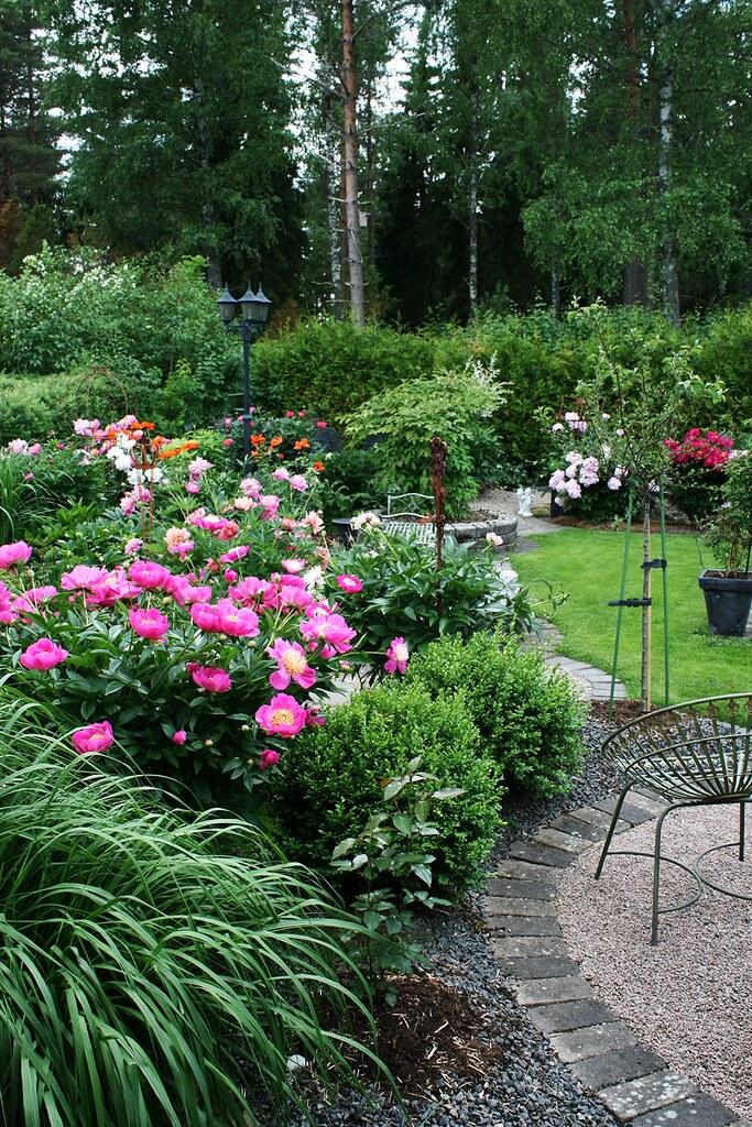 Garden View Peonies Pia S Garden Flickr