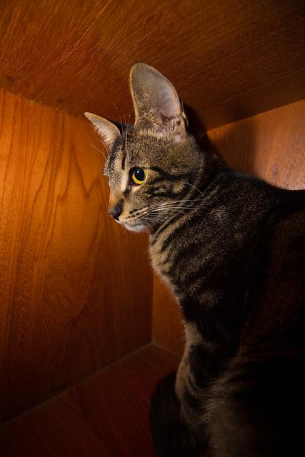 Schrödinger's Cat | Dentro da caixa, com medo de alguém abri… | By ...