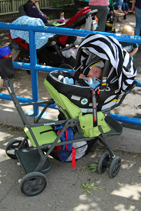 Joovy Caboose Stand-on Tandem Stroller - Appletree