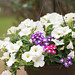 Summer flowers 02-750