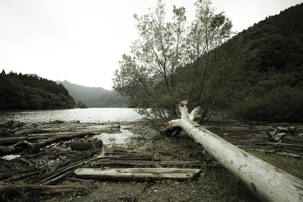 流木置き場w
