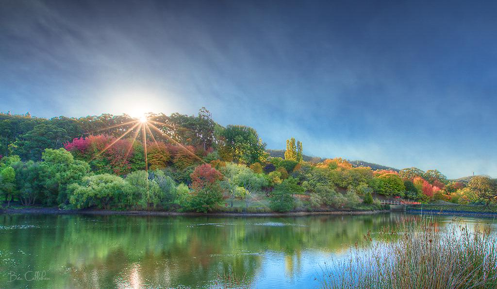 Mount Lofty Botanic Garden Bec Callahan Flickr