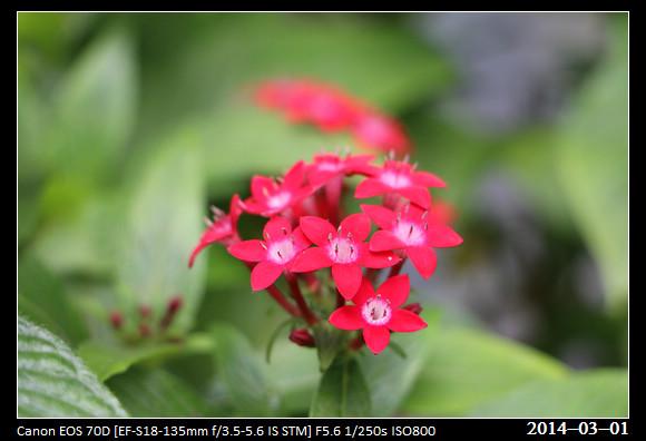20140301_Flowers