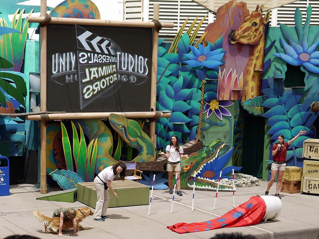 Hollywood Mobile Dog Grooming Long Island