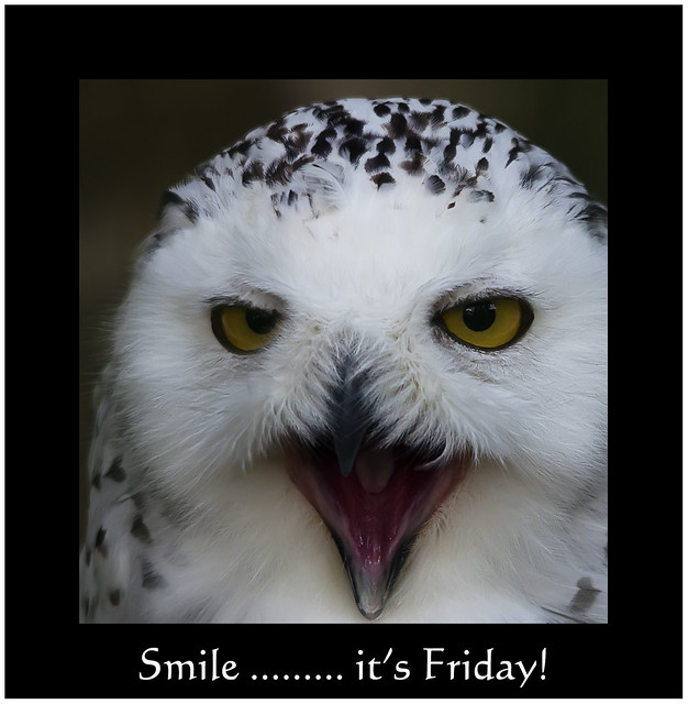 Image result for smile its friday