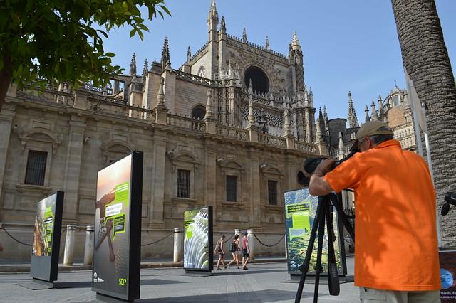 AionSur 26959385724_9369000f08_z_d La catedral de Sevilla, dormitorio de la colonia más grande de Europa de cernícalos Cultura Medio Ambiente