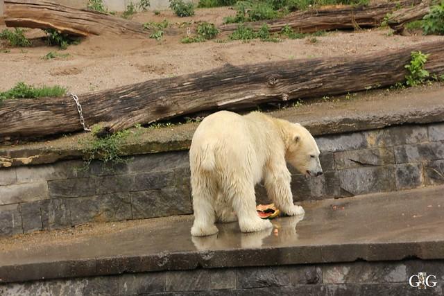 Besuch Zoo Rostock 09.07.20168