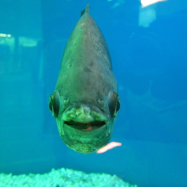She loved posing for the shot #fish #Saputara #aquarium #n…   Flickr Jay Z