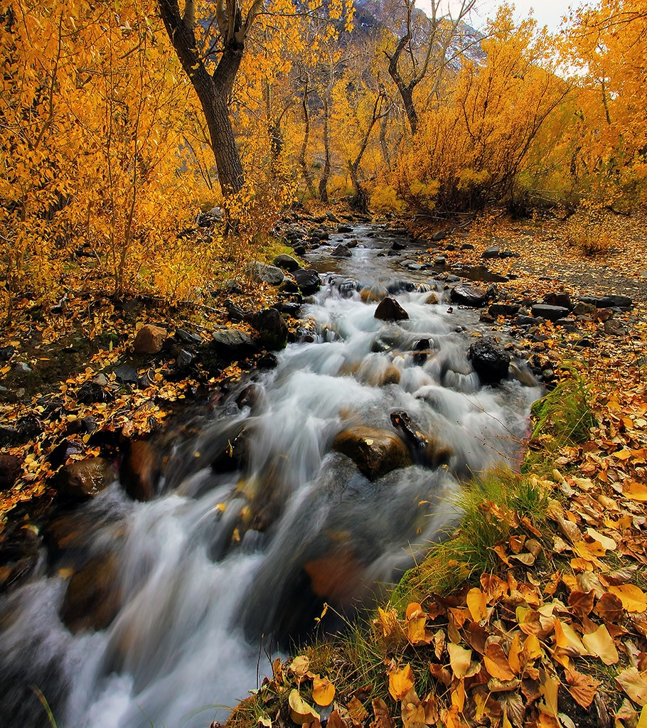 Fall Flow In Mcgee Creek Fall Aspen Color Along With A
