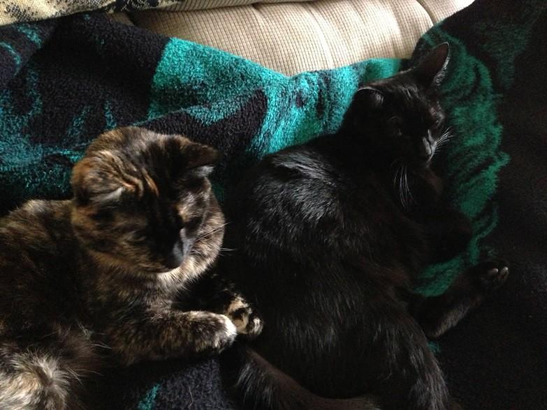 an Jose Cat Cafe, Cat adoption venue, Smokey and Esmeralda, Spot the cat, sister kitties