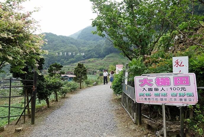 4 陽明山 繡球花 大梯田 竹子湖