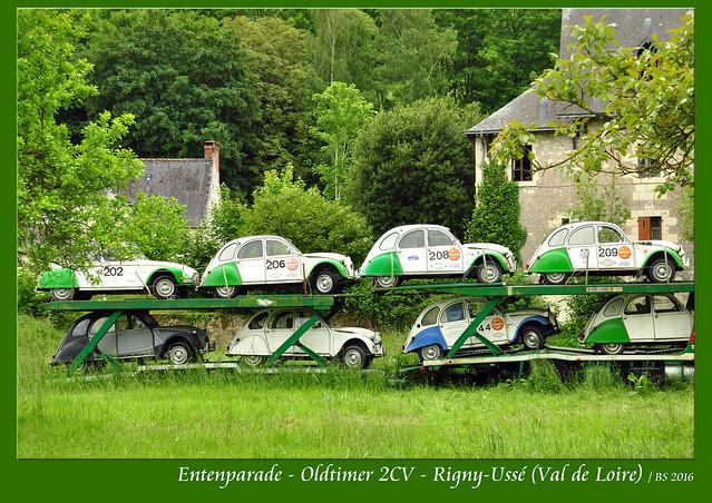 """Der Citroën 2CV (deux chevaux = zwei Pferde). Bei uns als ENTE bekannt und bei Oldtimerfans beliebt. Die Schweizer sagen """"Döschwo"""" dazu. Hier gleich eine ganze Entenparade im Gänsemarsch. Entdeckt habe ich das nette Ensemble zufällig auf einem verwilderten Grundstück in Rigny-Ussé im Tal der Loire, unweit des berühmten Château d'Ussé, das wir gleich besuchen werden. Foto Brigitte Stolle 2016"""