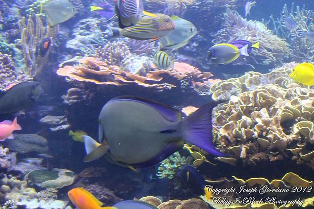 Atlantis Marine World Long Island Aquarium Flickr