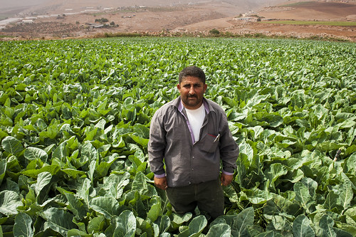 A farmer shows his fields where he grow cabbage | by World Bank Photo Collection