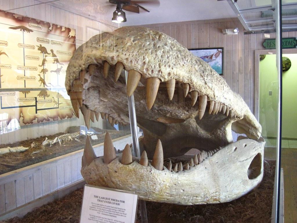 1024 x 768 jpeg 201kBPurussaurus