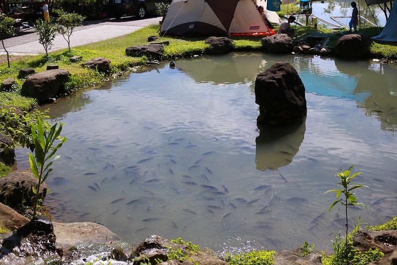 池裡好多魚