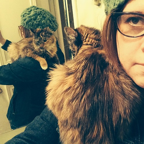 Shoulder cat. #wyllastout #permakitten #kitten #cat #ibkc