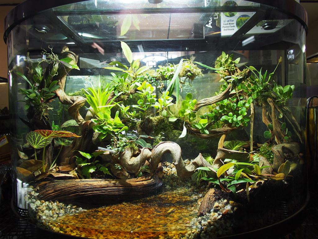 Vivarium john pittman flickr for Aquarium decoration sealant
