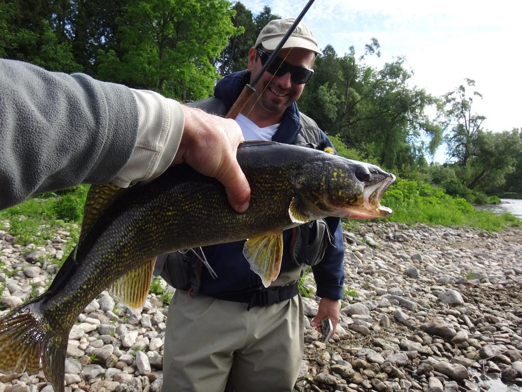 River Walleye on a centerpin