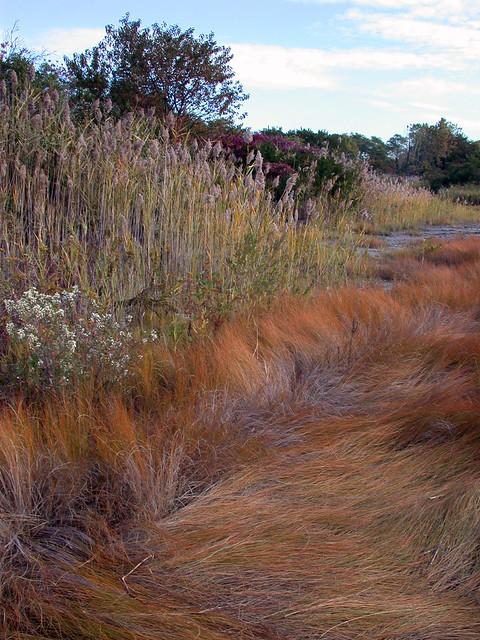 Brooklyn Salt Marsh Nature Center