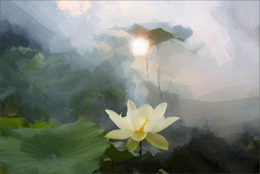 Lotus Flower Oil Paintings