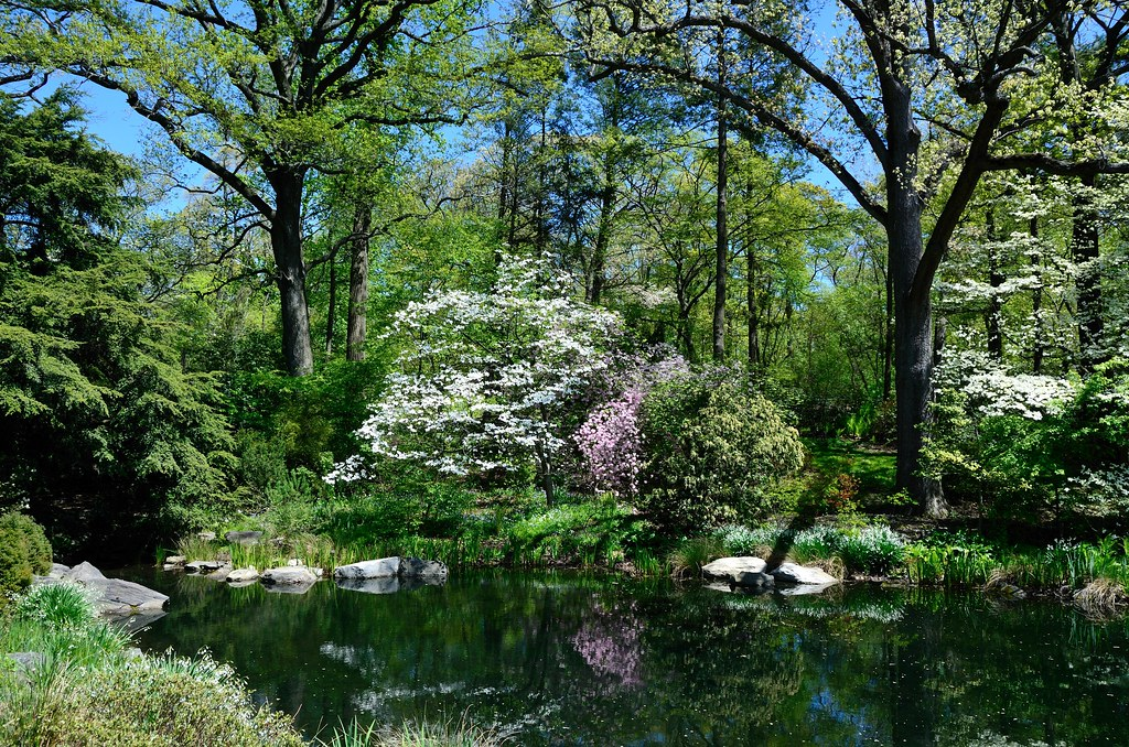 The New York Botanical Garden Forest As Viewed From The En Flickr