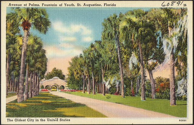 Avenue Of Palms Fountain Of Youth St Augustine Florida