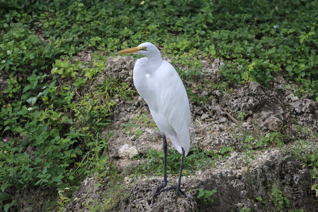 A White Heron Nature Vs Civiliation