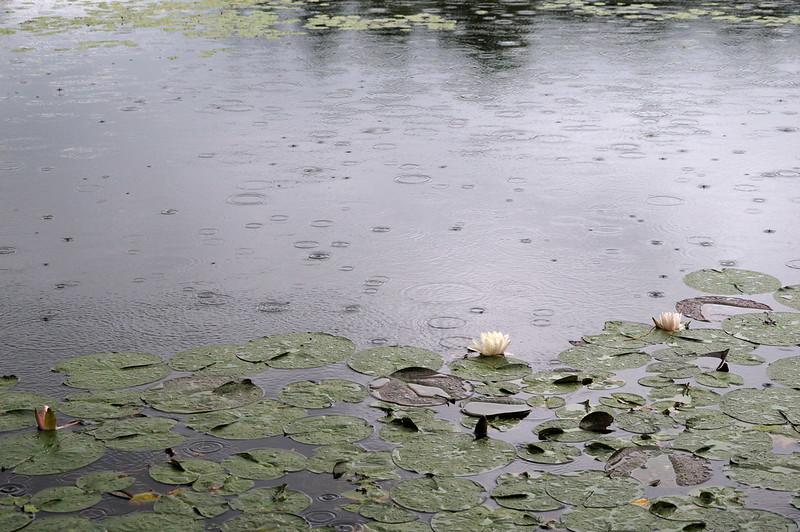 雨降り_2016-06