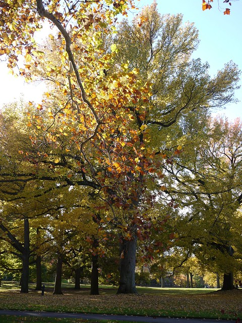 Bronx Botanical Garden Explore Lulun Kame 39 S Photos
