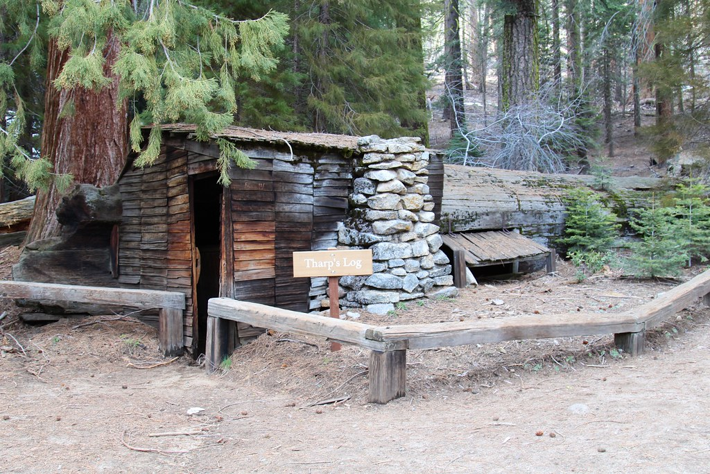 Tharp 39 s log cabin tharp 39 s log is a hollowed giant for Log cabin sequoia national park