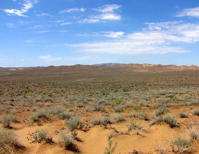 Kyzylkum Desert  UzbekistanKyzylkum Desert