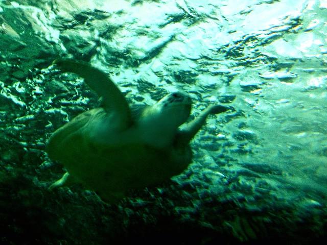 Ripley 39 S Aquarium Myrtle Beach South Carolina Sea Turtle Flickr Photo Sharing