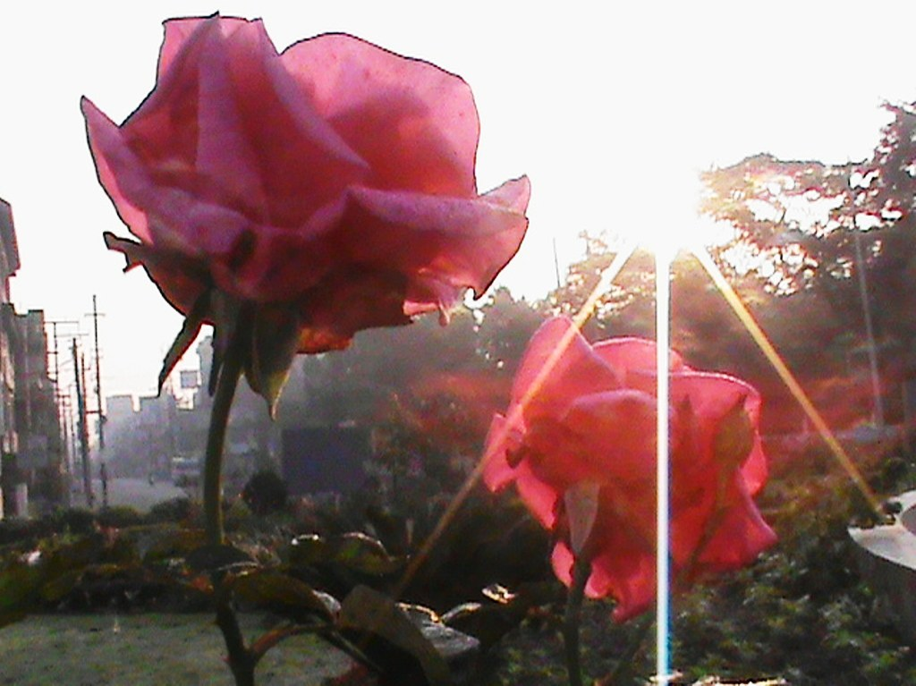 Good Morning Flowers Gif Good Morning Flowers