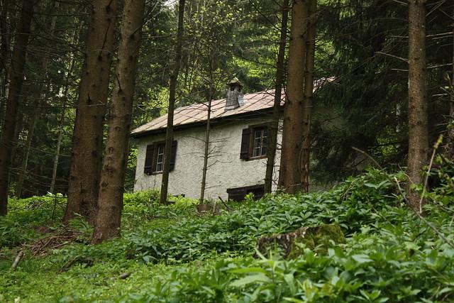 la maison de lhomme des bois  Explore bulbocode909s
