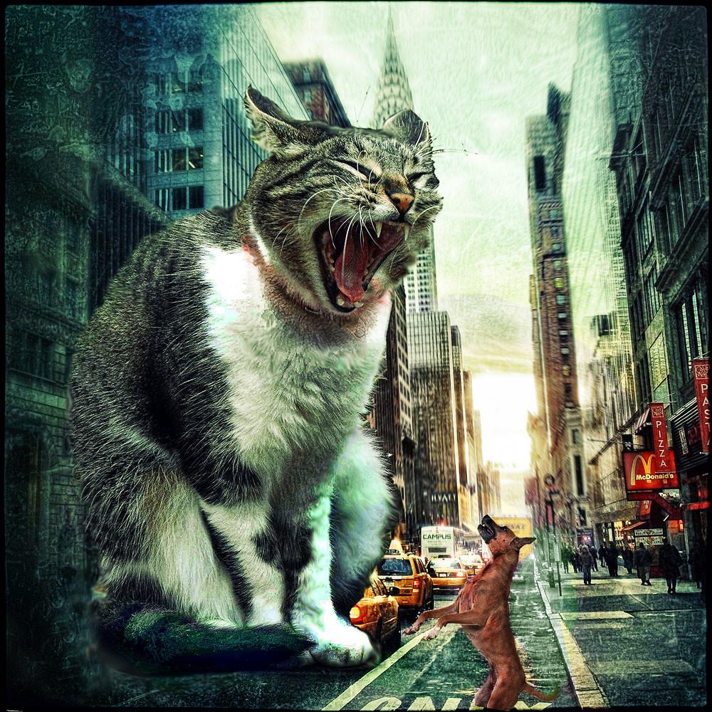 Mutant Cat | Thanks to: Cat- httpwww.flickr ...