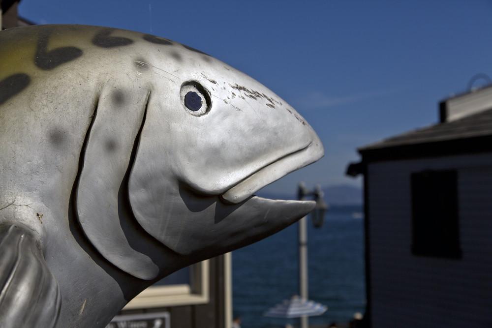 Santa barbara fish santa barbara ca k ngrum flickr for Santa barbara fishing report