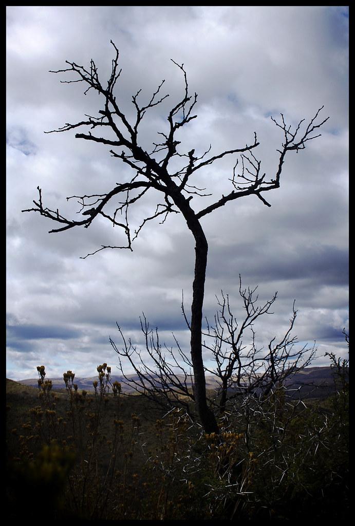 un rbol quemado c rdoba diego livy flickr