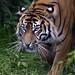 Prowling Kirana