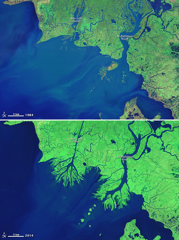 Growing Deltas In Atchafalaya Bay While Most Of The