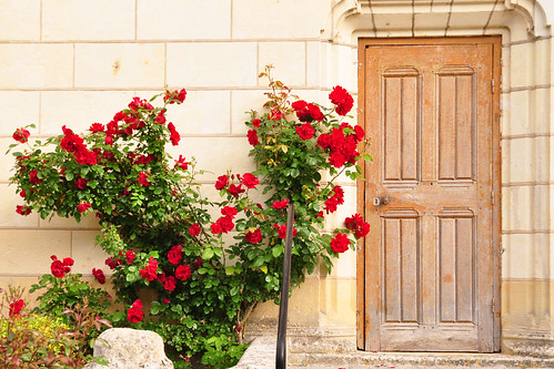 """Auf dem Programm steht das """"Märchenschloss"""" Ussé. Wie schon das Château de Chinon zählt es zu den Schlössern der Loire, obwohl es an einem ihrer Nebenflüsse, der Indre, liegt. Der Ort selbst nennt sich Rigny-Ussé und befindet sich im Département Indre-et-Loire. Wir sind zu früh. Die Kasse hat noch nicht geöffnet, das Schloss liegt im frühen Morgennebel. Wir kaufen uns ein Baguette, schlendern durch den blühenden kleinen Ort, trinken einen Kaffee ... nach und nach füllen sich Straßen und Parkplätze, Radfahrer, Wanderer und Autotouristen nähern sich der Schlossanlage. Um Punkt 10 Uhr öffnet die Eintrittskasse - und einer Besichtigung steht nichts mehr im Wege."""