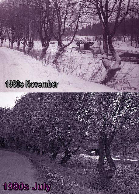1981 ивы у парка летом и зимой dates 1980е