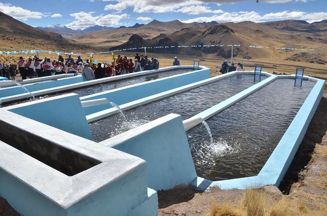 Inauguracion estanque para crianza de truchas choroma sant for Crianza de truchas en lagunas