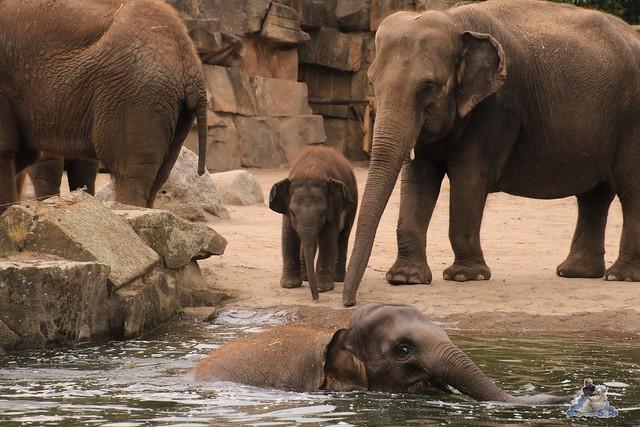 Tierpark Berlin 28.05.2016  0227