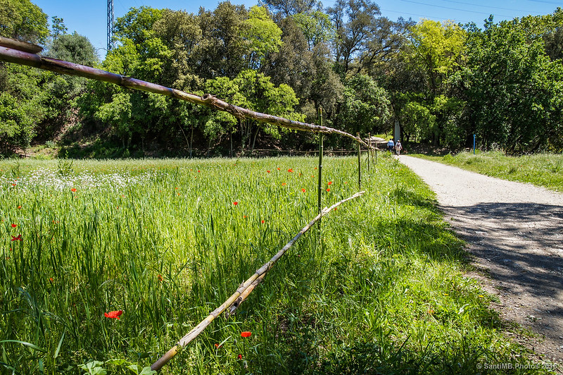 Campo al lado del camino