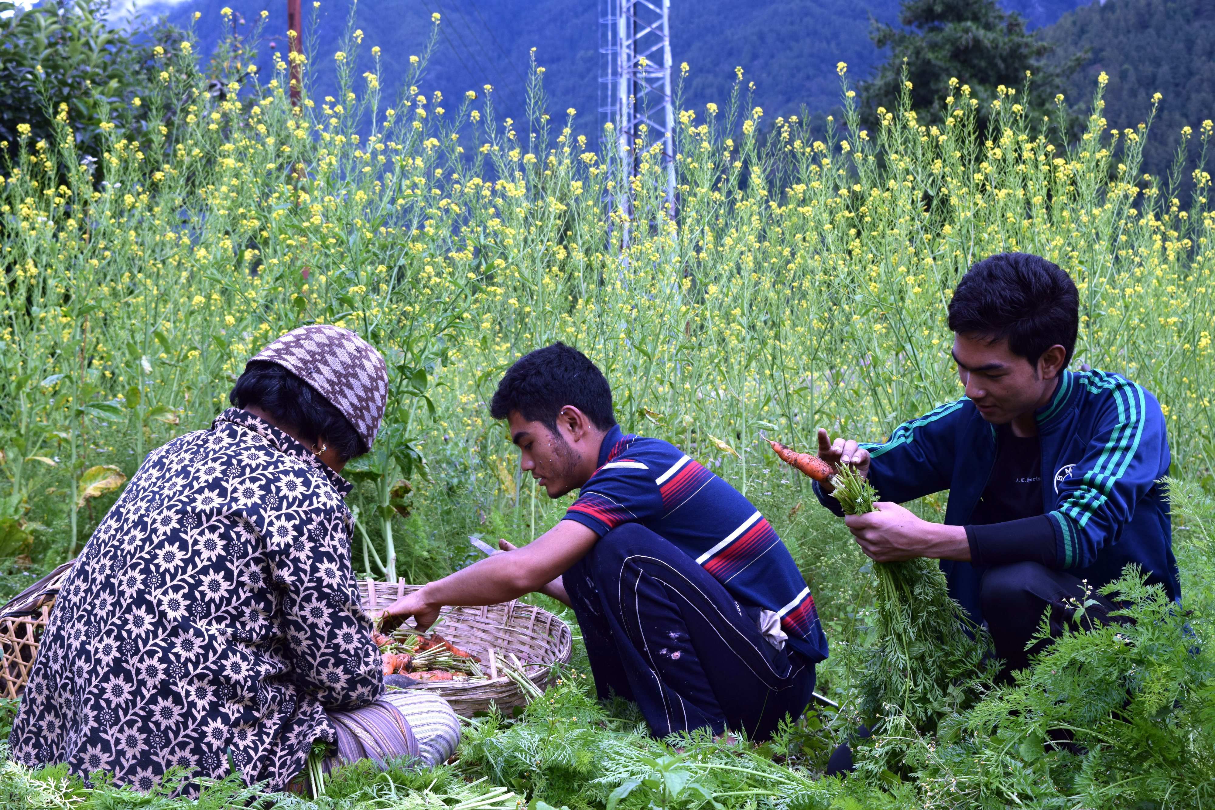 the problems and solutions of green marketing in developing country essay The fight against poverty this approach focuses on the problems of  hunger and misery in developing countries and on  the missing link in development the green .